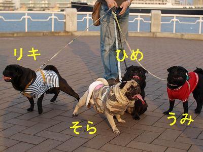 s-2010_04110095.jpg