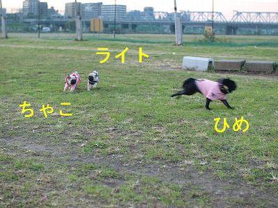 s-2010_11190027.jpg