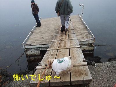 s-2010_11220069.jpg