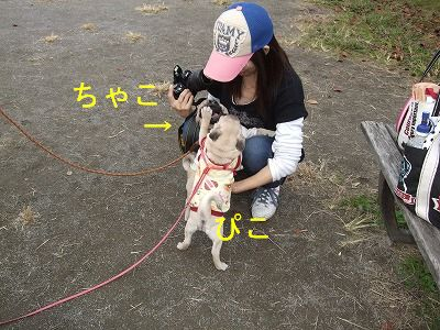 s-2010_11220127.jpg