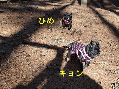 s-2010_11280155.jpg