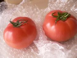 小林トマト