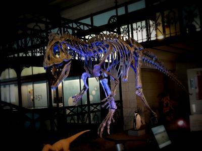 ベルギー王立自然史博物館