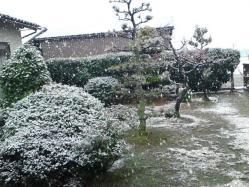 yuki2010326.jpg