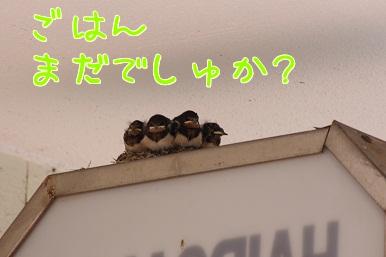 1000812_7.jpg