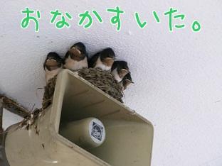 100624_3.jpg