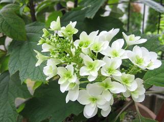 庭に咲いた無名の花