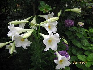 庭に咲いた
