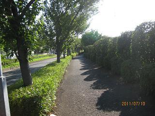 ヒナの散歩道