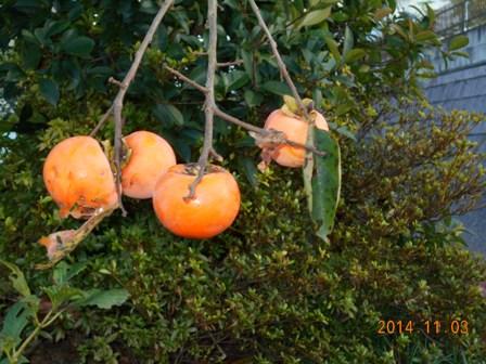 柿のブログ