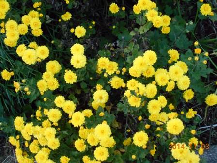 1お花のブログ用