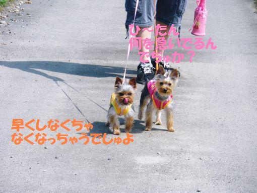 2011年05月08日_IMGP0495~1