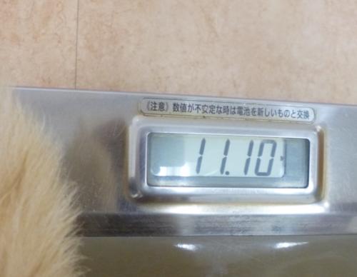 真子の検診9_convert_20120910143916