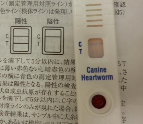 真子の検診12_convert_20120910144447