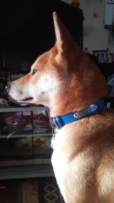 忠犬カイちゃん_convert_20130129181811