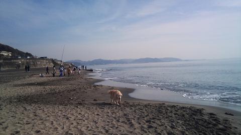 DSC_1082120101七里ヶ浜