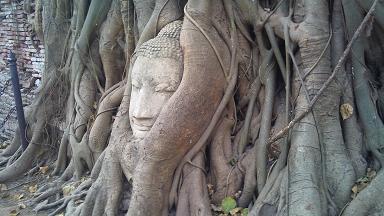 DSC_0075菩提樹