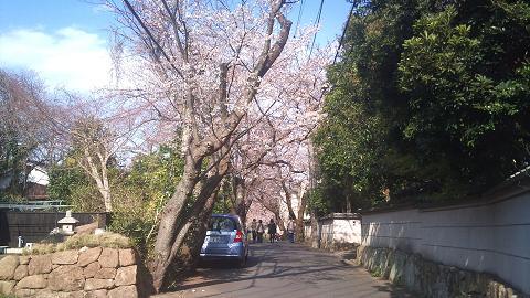 DSC_0262120407桜