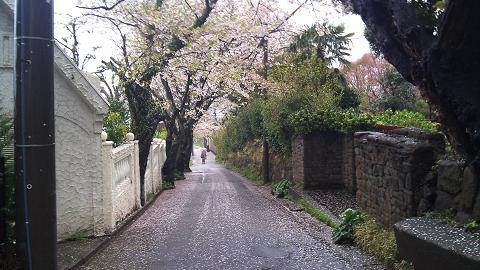 DSC_0342120414雨の花見
