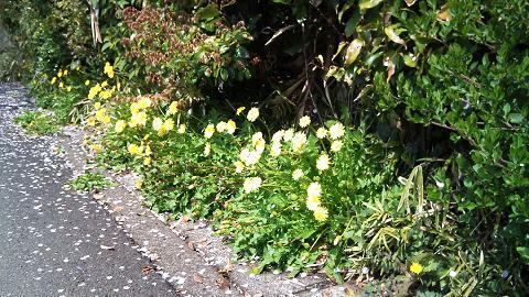 DSC_0353120415桜吹雪に春の花
