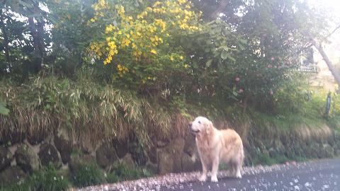 DSC_0371120417ジュティーと黄色い花