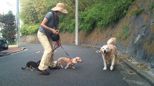 DSC_1542120810JUTY散歩