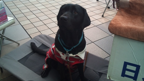 DSC_0062121031盲導犬