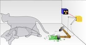 猫の話003