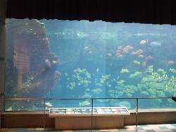 水族館・魚群④