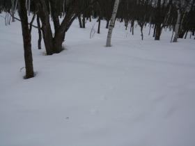 スノーシューでトレッキング4