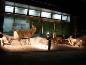 たんちょう釧路空港1