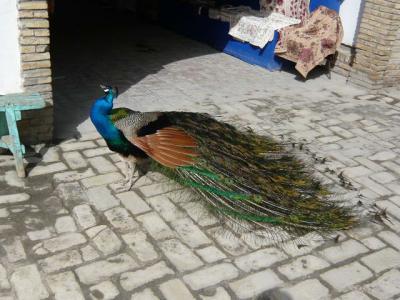 ブハラ郊外の観光36