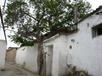 ブハラ旧市街の観光108