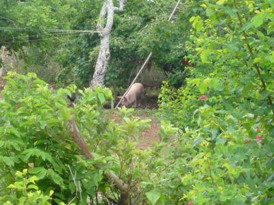 パングラオ島アロナビーチ10