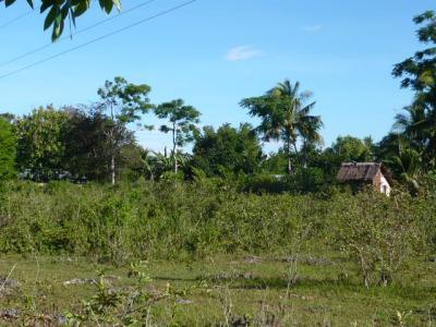 パングラオ島からセブ島へ3