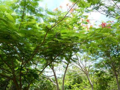 パングラオ島からセブ島へ22