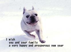 NEW YEAR BASIL_640