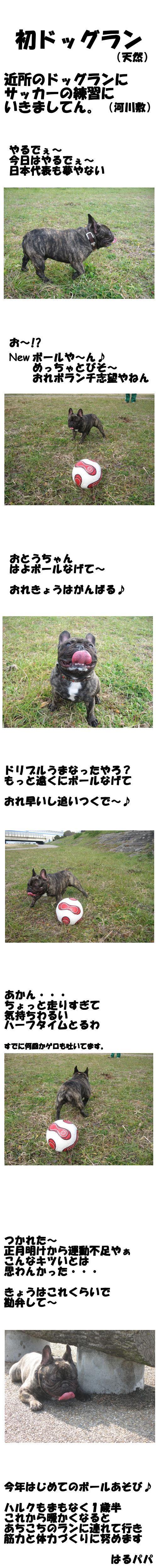 がんばれ♪日本代表犬