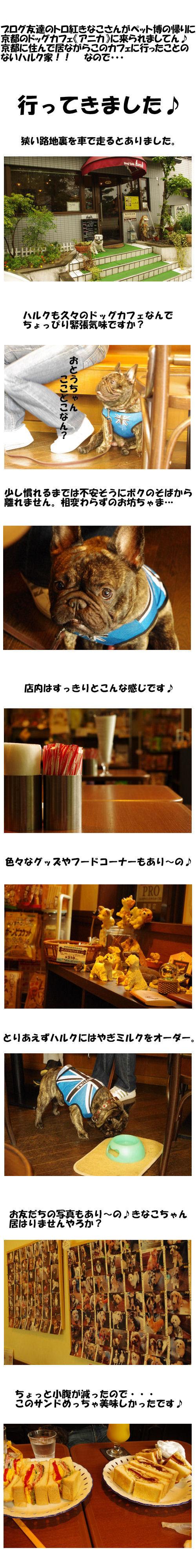 久々のドッグカフェ♪