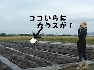 苗_003