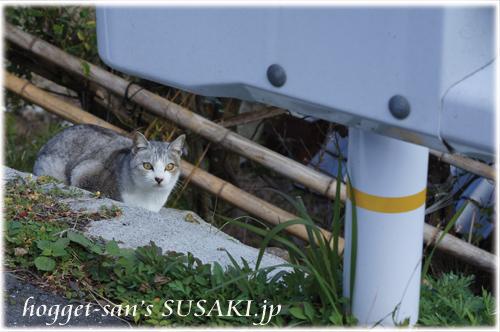 吾桑の猫1
