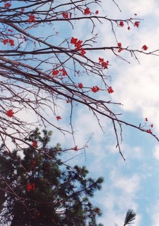 池田くん1月