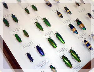 昆虫標本_2