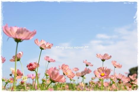 DSC_0699_20101028115425.jpg