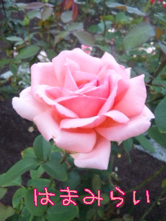 blog-11102005.jpg