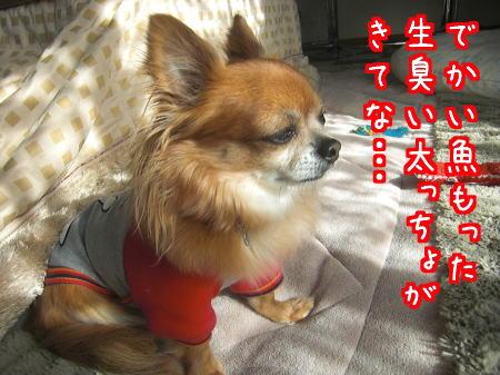 Aブログ0105