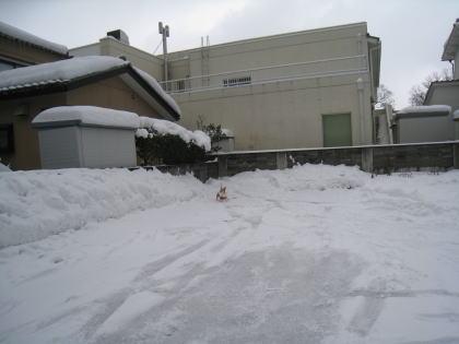 momo8729_20120210233002.jpg