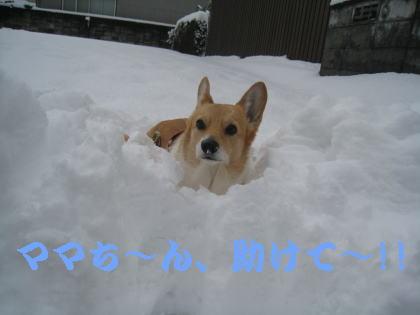 momo9314.jpg