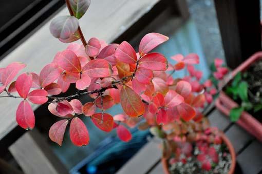 Sarusuberi_Oct_2014_1.jpg