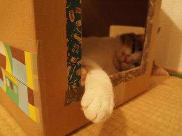 箱入り小梅の観察10